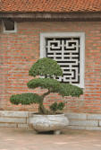 bonzai sculptured decorative tree