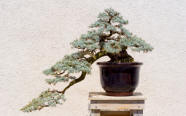 cascading bonzai tree design